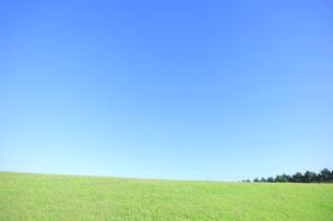 芝生と青空の写真素材 [FYI04792526]