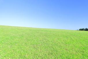 芝生と青空の写真素材 [FYI04792527]