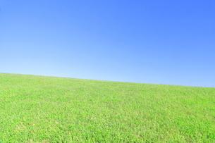 芝生と青空の写真素材 [FYI04792529]
