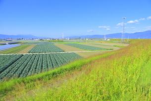 吉野川右岸の広大な平野の写真素材 [FYI04792553]