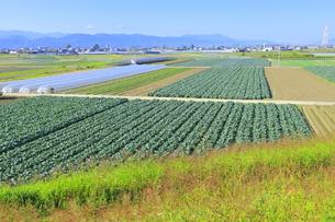 吉野川右岸の広大な平野の写真素材 [FYI04792554]