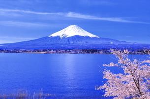 桜の咲く河口湖と富士山の写真素材 [FYI04792557]