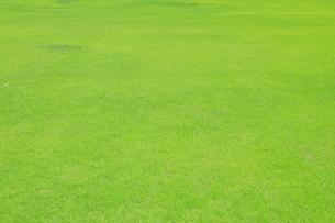 芝生の写真素材 [FYI04792569]