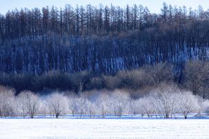 北海道冬の風景 更別村の樹氷と気嵐の写真素材 [FYI04792645]