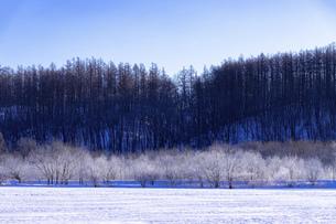 北海道冬の風景 更別村の樹氷と気嵐の写真素材 [FYI04792647]