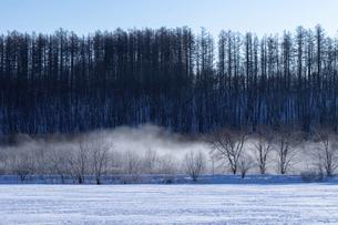 北海道冬の風景 更別村の樹氷と気嵐の写真素材 [FYI04792648]
