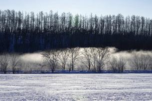 北海道冬の風景 更別村の樹氷と気嵐の写真素材 [FYI04792649]