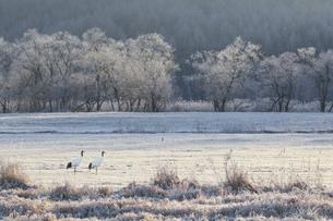 初冬の朝日の写真素材 [FYI04792717]