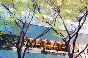 新緑とビルの写真素材 [FYI04792726]
