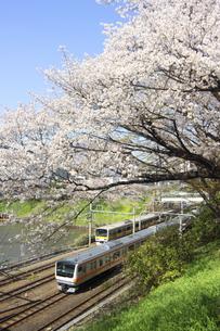 満開の桜と電車 東京の写真素材 [FYI04792770]