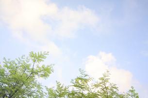 青空の下の若葉の写真素材 [FYI04792894]