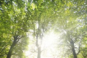 大樹と太陽光の写真素材 [FYI04792895]