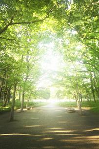 公園の散歩道の写真素材 [FYI04792897]