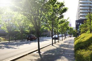緑の住宅街の写真素材 [FYI04792913]
