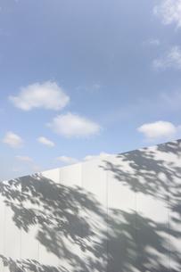 白壁の葉の影の写真素材 [FYI04792919]