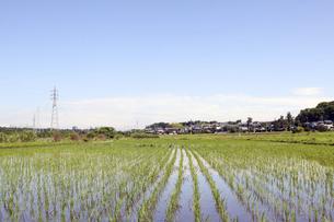 近郊農家 水田の写真素材 [FYI04792921]