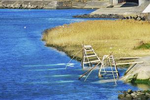 広川のシロウオ漁(江戸時代より伝わる四つ手網を使った伝統漁法)の写真素材 [FYI04792943]