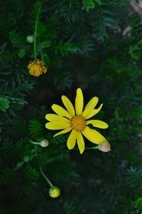 真上から見た花の写真素材 [FYI04792964]