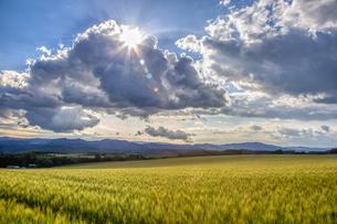 雲の切れ間から太陽が差す美瑛の丘の写真素材 [FYI04792974]