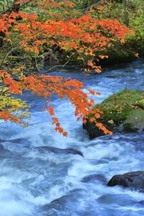 奥入瀬渓流の紅葉の写真素材 [FYI04793342]