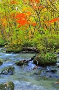 奥入瀬渓流の紅葉の写真素材 [FYI04793346]