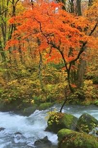 奥入瀬渓流の紅葉の写真素材 [FYI04793348]