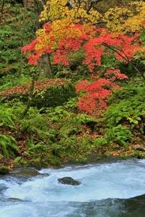 奥入瀬渓流の紅葉の写真素材 [FYI04793350]