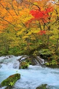 奥入瀬渓流の紅葉の写真素材 [FYI04793353]