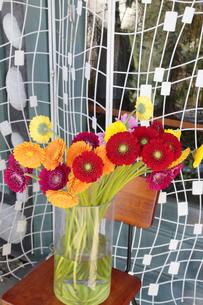 ガーベラの花の写真素材 [FYI04793507]