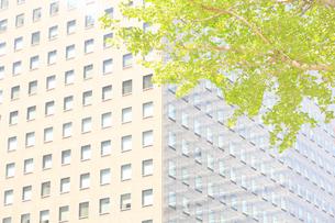 大手町の街路樹の新緑の写真素材 [FYI04793640]
