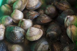 三本松港で水揚げされた赤貝の写真素材 [FYI04793757]
