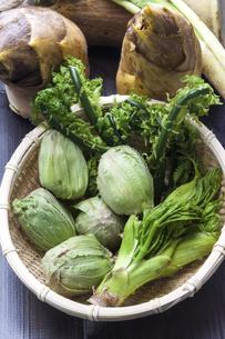 春の山菜の写真素材 [FYI04793801]