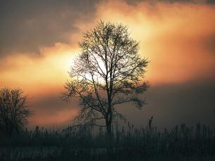 冬の早朝の空の写真素材 [FYI04794274]