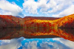 朝日で赤く染まる蔦沼の紅葉の写真素材 [FYI04794403]