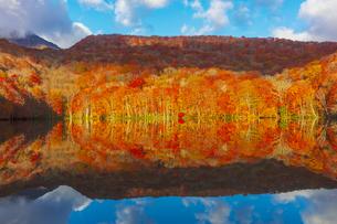 朝日で赤く染まる蔦沼の紅葉の写真素材 [FYI04794405]