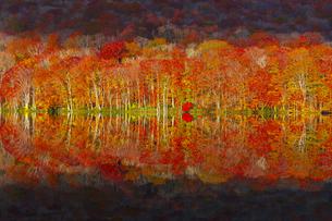 朝日で赤く染まる蔦沼の紅葉の写真素材 [FYI04794414]
