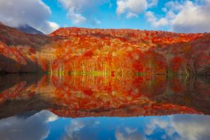 朝日で赤く染まる蔦沼の紅葉の写真素材 [FYI04794425]