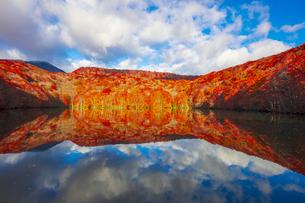 朝日で赤く染まる蔦沼の紅葉の写真素材 [FYI04794430]