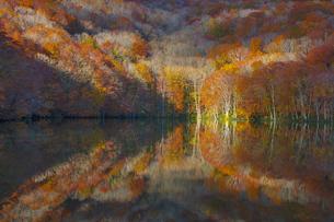 朝日で赤く染まる蔦沼の紅葉の写真素材 [FYI04794460]