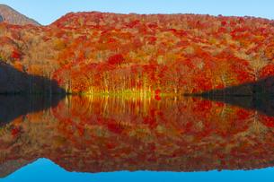 朝日で赤く染まる蔦沼の紅葉の写真素材 [FYI04794506]