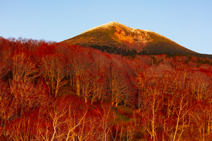 夕日を浴びる八甲田山と紅葉の写真素材 [FYI04794514]