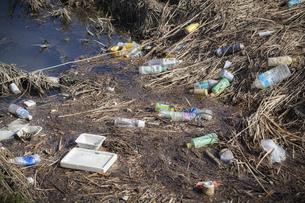 川岸に捨てられたペットボトルなどのプラスチックごみの写真素材 [FYI04794596]