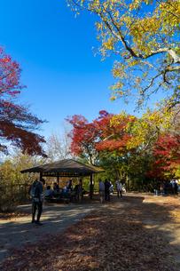 紅葉する高尾山の写真素材 [FYI04795117]