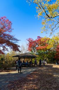 紅葉する高尾山の写真素材 [FYI04795118]