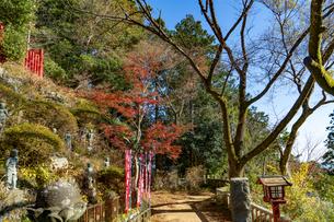 紅葉する高尾山の写真素材 [FYI04795125]