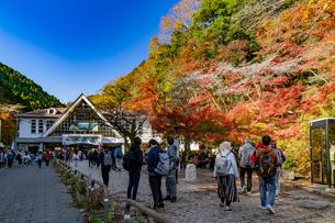 紅葉する高尾山の写真素材 [FYI04795150]