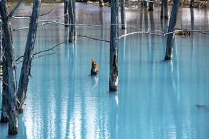 雪が残る春の青い池 美瑛町の写真素材 [FYI04795167]