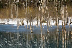 雪が残る春の青い池 美瑛町の写真素材 [FYI04795169]