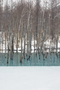 雪が溶け始めた早春の青い池 美瑛町の写真素材 [FYI04795174]