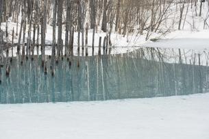 雪が溶け始めた早春の青い池 美瑛町の写真素材 [FYI04795175]
